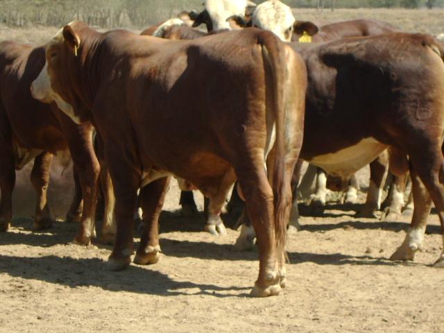 Paraguay: ganadería y su crecimiento